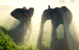 The herd of elephants Stock Photography