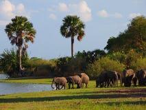 Herd of elephants Royalty Free Stock Photography