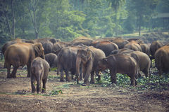Herd of elephants at mealtimes Stock Image