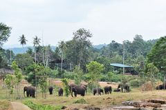 A herd of elephants roam freely in natural surroundings stock image