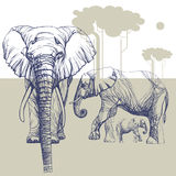 Herd of elephants in the savannah, contour drawing with understated, planar background. Image herds of elephants in the wild, transparent silhouettes on Royalty Free Stock Image