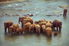 Herd of elephants taking bath in rough river Stock Photography