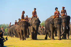 Herd Elephants Walking Towards Camera Royalty Free Stock Photos