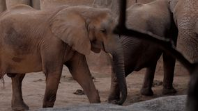Herd of elephants a zoo off valencia spain stock footage