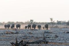 Herd of Elephnats stock photography