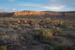 Herd of Elk, Chaco Canyon National Park Royalty Free Stock Images