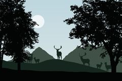 Herd of fallow deer standing under deciduous trees, vector, with sky with sun Stock Image