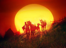 Herd flame Royalty Free Stock Image