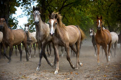 Herd of foals in the pasture Stock Photos