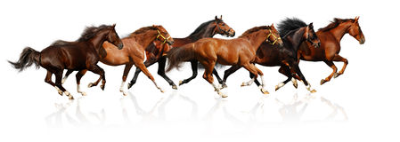 Herd gallops Stock Photos