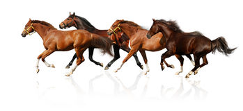 Herd gallops Royalty Free Stock Image