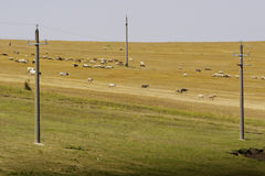 Herd of goats. A herd of goats on a hill in Romania Stock Images