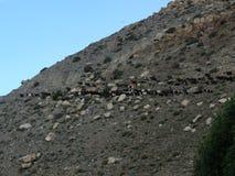 Herd of Goats on Himalayan Mountain Stock Photos