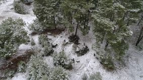 A herd of goats is moving across the snow-covered forest in search of food. Aerial shooting video 4k. A herd of goats is moving along a snow-covered field and a stock footage