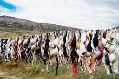 Herd, Grass, Tree, Grassland royalty free stock image