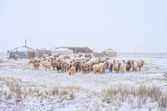 Herd of herbivorous animals in snowy prairie Royalty Free Stock Photo