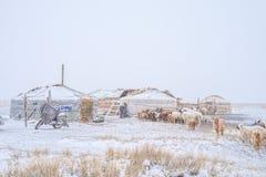 Herd of herbivorous animals in snowy prairie Stock Photos