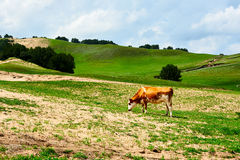 The herd on hillside Royalty Free Stock Photos