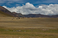 Herd of horses. In the vast landscape royalty free stock photography