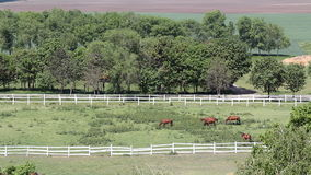 Herd of horses aerial view stock video