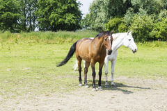 Herd of horses against background Royalty Free Stock Images