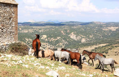 Herd of horses in the Andalusian mounts Stock Image