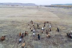 The herd of horses in autumn on pasture, grazing horses stock photos
