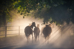 Herd of horses. Back to the ranch pastures, summer season Stock Photos