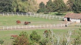 Herd of horses in corral stock footage