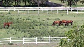 Herd of horses stock video footage