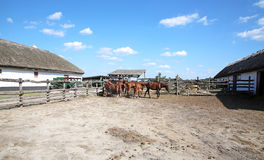 Herd of horses eating dry hay in the summer corral Stock Photo