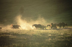 Herd of horses in evening Stock Photography