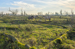 Herd of horses in a field in autumn Royalty Free Stock Image