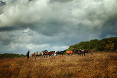 The herd of horses Stock Photography