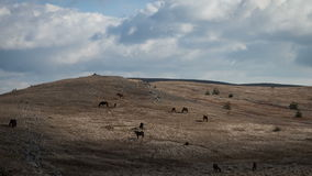 Herd of horses in a field stock footage
