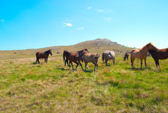 Herd of horses Stock Photos