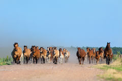 Herd of horses and foals runs outdoor Stock Photo