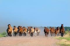 Herd of horses and foals runs outdoor Stock Photo