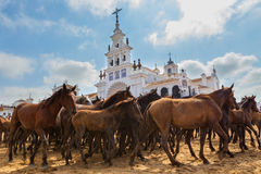 Herd of horses in front the church waiting for baptism. A herd of horses in front of the church waiting for baptism. El Rocio Royalty Free Stock Photos
