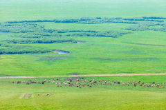 A herd of horses on the grassland Royalty Free Stock Photo