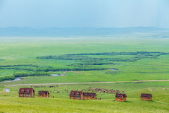 A herd of horses on the grassland Royalty Free Stock Images