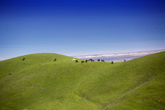 Herd of horses is grazed against mountains in Azerbaijan stock photography