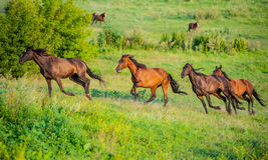 Herd Stock Image