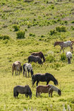 Herd of horses grazing in field Stock Photo