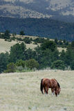 Herd of horses grazing in field stock photos