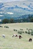Herd of horses grazing in field stock image