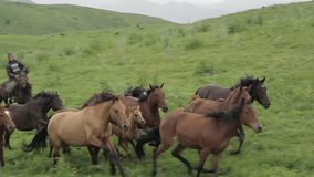 The herd of horses is grazing in the foothills of Alma-ata. stock footage