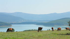 Herd Of Horses Grazing At Mountain Valley stock video footage