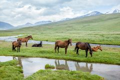 Herd of horses grazing in mountains Royalty Free Stock Photography