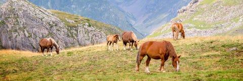 Herd of horses grazing near Pourtalet pass, Ossau valley in the Pyrenees France. Herd of horses grazing near Pourtalet pass, Ossau valley in the Pyrenees, France Stock Photo
